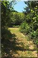 SX8557 : Path into meadow near Pords Bridge by Derek Harper