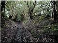SJ9793 : Ancient holloway by Stephen Burton