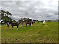 SJ7077 : Equestrian Display at the Royal Cheshire County Show 2019 by Jeff Buck