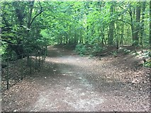 TQ0651 : Old Epsom Road on ascent to the ice house by Hugh Craddock