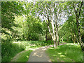 SJ7971 : Path into Jodrell Bank arboretum by Stephen Craven