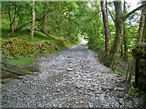 NY3204 : Track from Dale End to Elterwater [6] by Michael Dibb