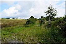 H4178 : A hidden lane, Killinure by Kenneth  Allen