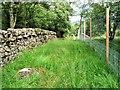 NS5776 : Craigmaddie Plantation by Raibeart MacAoidh