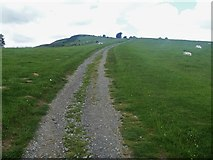 NY2925 : The ascent to Latrigg [15] by Michael Dibb
