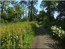 NS3478 : Path beside a golf course by Lairich Rig