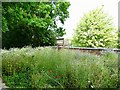 SK2527 : Wildflower meadow at Rolleston-on-Dove former railway station by Ian Calderwood