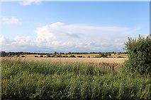 TL4438 : Field by Hall Lane, Chrishall by David Howard