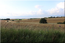 TL4138 : Fields by Bogmoor Road, Great Chishill by David Howard