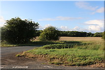 TL3934 : Nuthampstead Road near Barkway by David Howard