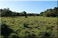 SU2705 : Ponies on Brinkenwood Lawn by Hugh Venables