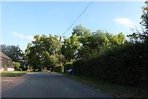 TL3929 : Duck Street, Little Hormead by David Howard