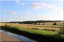 TL4326 : Fields by Albury Road, Furneaux Pelham by David Howard