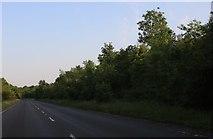 SP9585 : Sudborough Road, Brigstock by David Howard