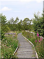 SN6862 : Cors Caron boardwalk north of Tregaron in Ceredigion by Roger  Kidd