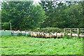 SE5692 : Sheep-pen by Mick Garratt