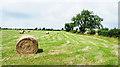 NZ1532 : Baled grass in field by Trevor Littlewood