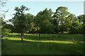SO5476 : Meadow beside Ledwyche Brook by Derek Harper