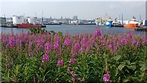 NJ9505 : River Dee and Aberdeen Harbour by Mat Fascione