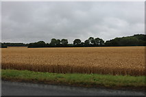 TM2666 : Field by Button's Hill, Maypole Green by David Howard