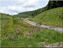 SN8056 : Course of drovers' road in upper Cwm Tywi, Powys by Roger  Kidd