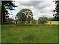 SJ7481 : Tatton Park, Trees near the Ice Pond by David Dixon