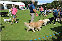 NS2209 : Dog Jamboree, Culzean Country Park 2019 by Billy McCrorie