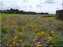 NT6779 : Beautiful Flower Beds at Winterfield Park Dunbar by Jennifer Petrie