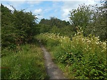 NS4962 : Jenny's Well Local Nature Reserve by Lairich Rig