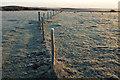 SY9484 : Fence, Langton Wallis Heath by Derek Harper