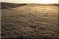 SY9584 : Frosty morning, Middlebere Heath by Derek Harper