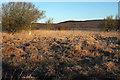 SY9584 : Enmired on Middlebere Heath / Hartland Moor by Derek Harper