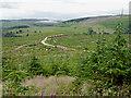 SN8854 : Coed Trallwm clearfell north-east of Abergwesyn, Powys by Roger  Kidd
