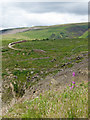 SN8854 : Clearfell and pasture north-east of Abergwesyn, Powys by Roger  Kidd