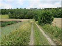 TQ1148 : Track near Dorking by Malc McDonald
