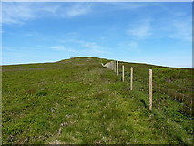 SJ1032 : Fenceline on Mynydd Tarw by Richard Law