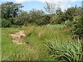 SH3846 : Wetland by stream by Jonathan Wilkins