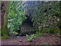 NY3606 : Rydal Hall & Gardens [15] by Michael Dibb