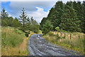 SN7568 : Track into Rhos Maengwelw forest by Nigel Brown
