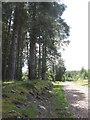NM9639 : Forestry track in Benderloch by M J Richardson