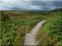 NS2371 : Boardwalk on the Nature Trail by Lairich Rig