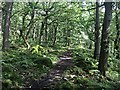 SK2579 : Track in Padley Gorge by Graham Hogg