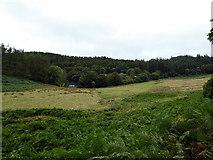SN7673 : Open ground on the Hafod estate by John Lucas