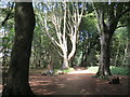 TQ3209 : Sunlight and shadows in woodland near Brighton by Malc McDonald
