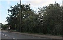 TL2352 : Woods by Waresley Road, Gamlingay by David Howard
