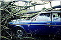 ST7983 : Gale force storm wind damage, Badminton, Gloucestershire 1990 by Ray Bird