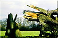 ST8590 : Gale force storm wind damage, nr Westonbirt, Gloucestershire 1990 by Ray Bird