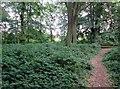 SE3731 : Temple  Newsam.  path  in  Bullerthorpe  Wood by Martin Dawes