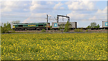 SK1409 : Rape field and Freight train near Huddlesford in Staffordshire by Roger  Kidd