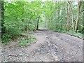 SO8992 : Muddy Path by Gordon Griffiths